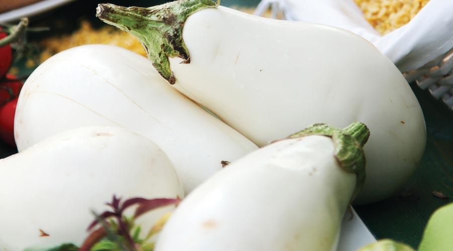 White Eggplant - Santorini