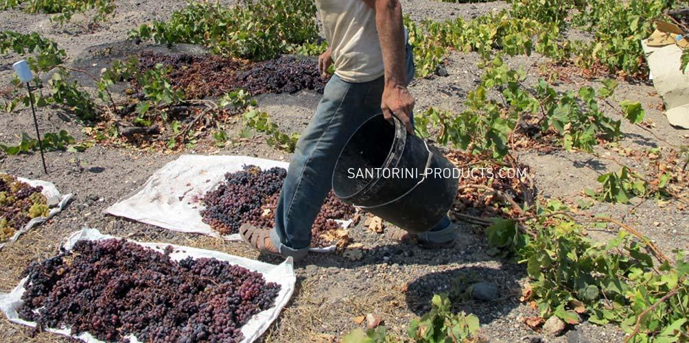 santorini-products-varieties-13