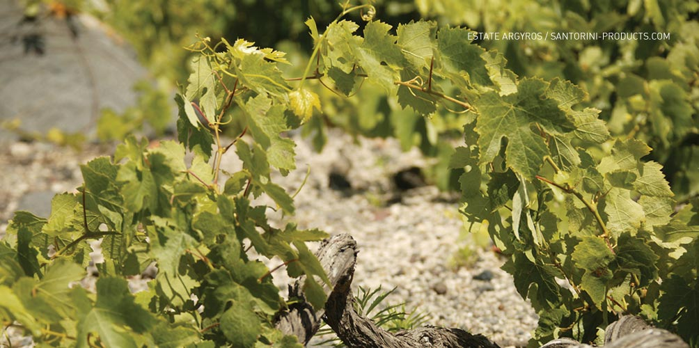 santorini-products-varieties-4