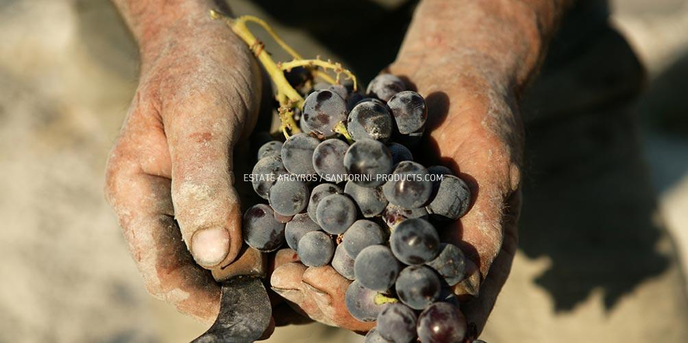 santorini-products-varieties-7