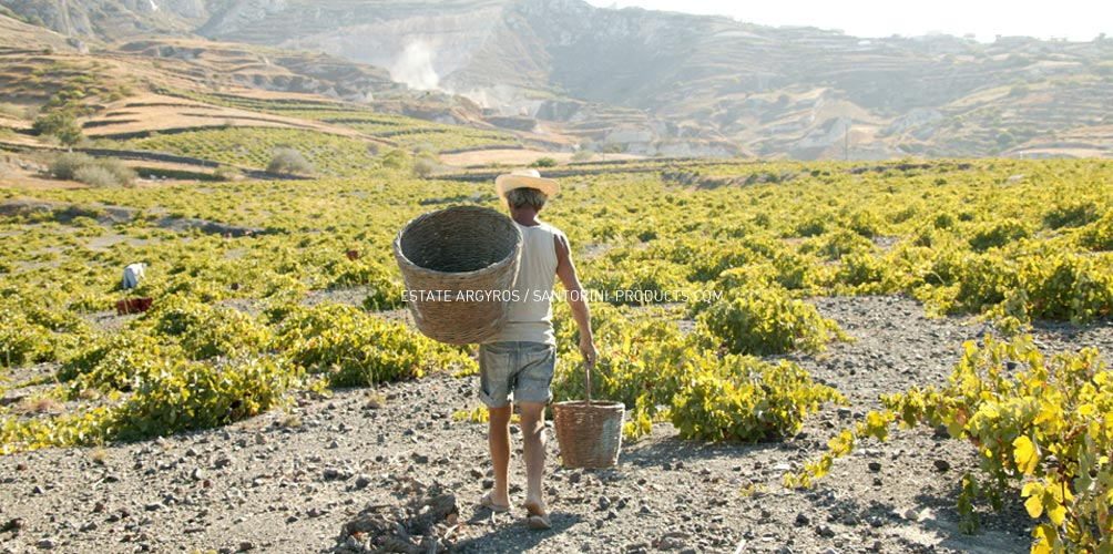 santorini-products-wineries-2