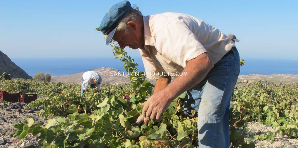 santorini-products-wineries-7