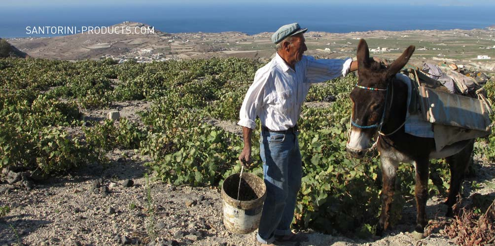 santorini-products-wineries-8