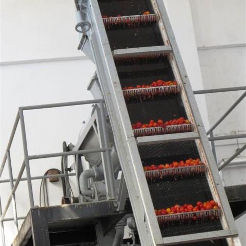 santorini-tomato-proccess3