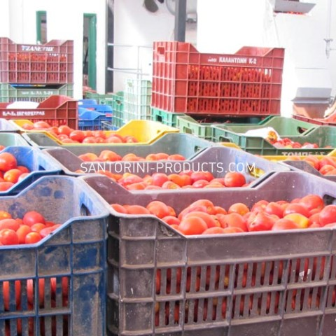 tomato-santorini-products-14
