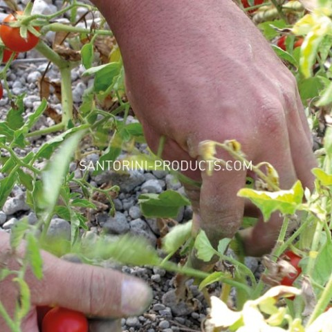 tomato-santorini-products-20